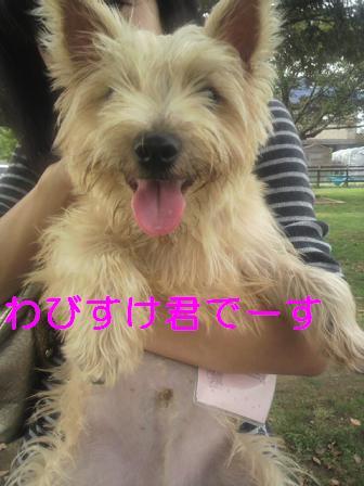 Wabisuke_2